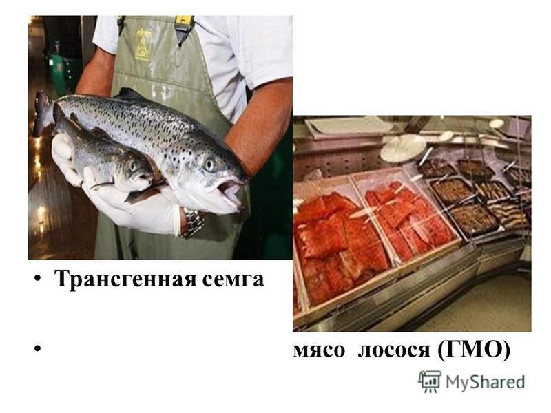 Трансгенная семга мясо лосося (ГМО)