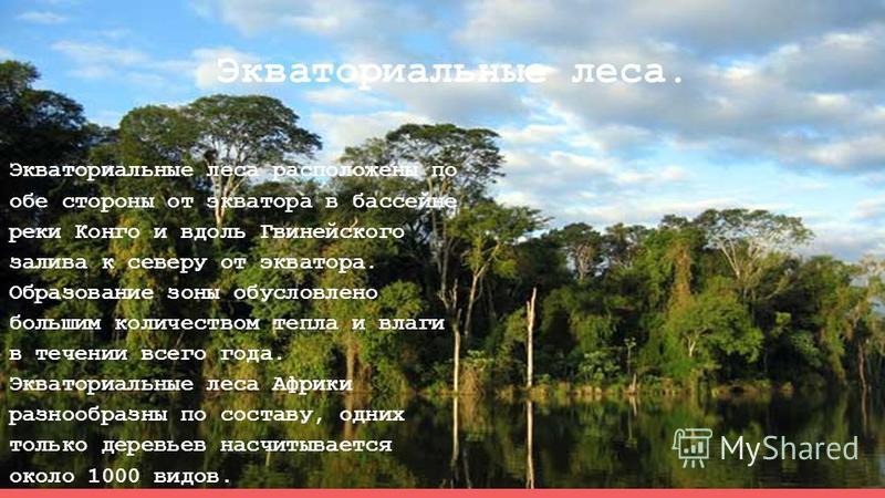 Экваториальные леса. Экваториальные леса расположены по обе стороны от экватора в бассейне реки Конго и вдоль Гвинейского залива к северу от экватора. Образование зоны обусловлено большим количеством тепла и влаги в течении всего года. Экваториальные