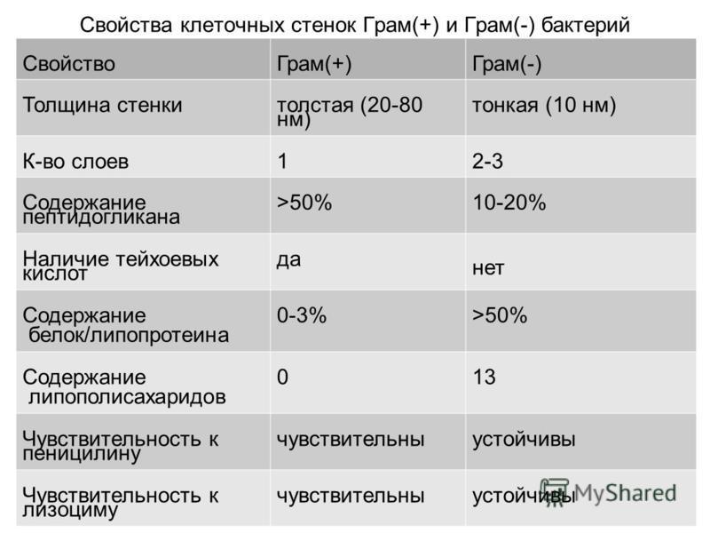 Свойства клеточных стенок Грам(+) и Грам(-) бактерий Свойство Грам(+)Грам(-) Толщина стенки толстая (20-80 нм) тонкая (10 нм) К-во слоев 12-3 Содержание пептидогликана >50%10-20% Наличие тейхоевых кислот да нет Содержание белок/липопротеина 0-3%>50%
