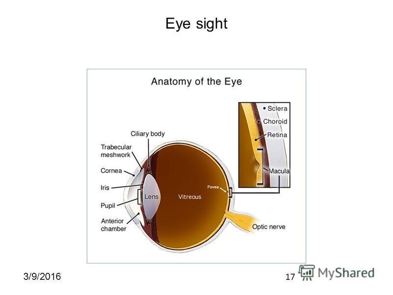 17 3/9/2016 Eye sight