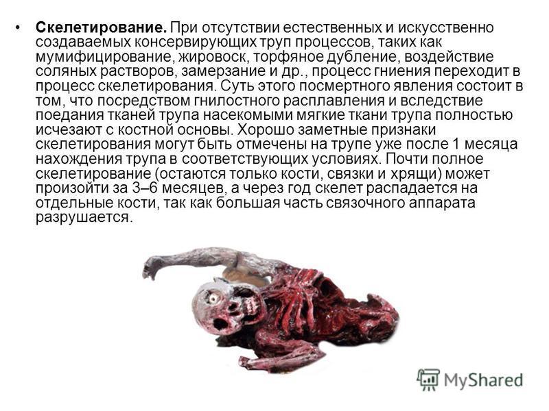 Скелетирование. При отсутствии естественных и искусственно создаваемых консервирующих труп процессов, таких как мумифицирование, жировоск, торфяное дубление, воздействие соляных растворов, замерзание и др., процесс гниения переходит в процесс скелети