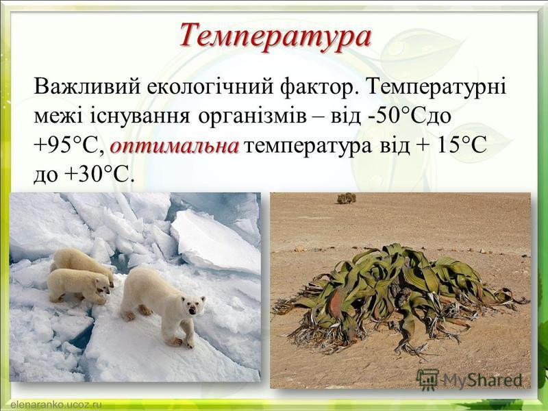 Температура оптимальна Важливий екологічний фактор. Температурні межі існування організмів – від -50°Сдо +95°С, оптимальна температура від + 15°С до +30°С.