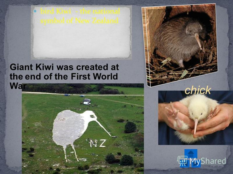 bird Kiwi - the national symbol of New Zealand Giant Kiwi was created at the end of the First World War chick