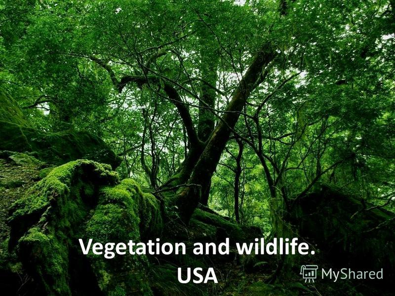 Vegetation and wildlife. USA