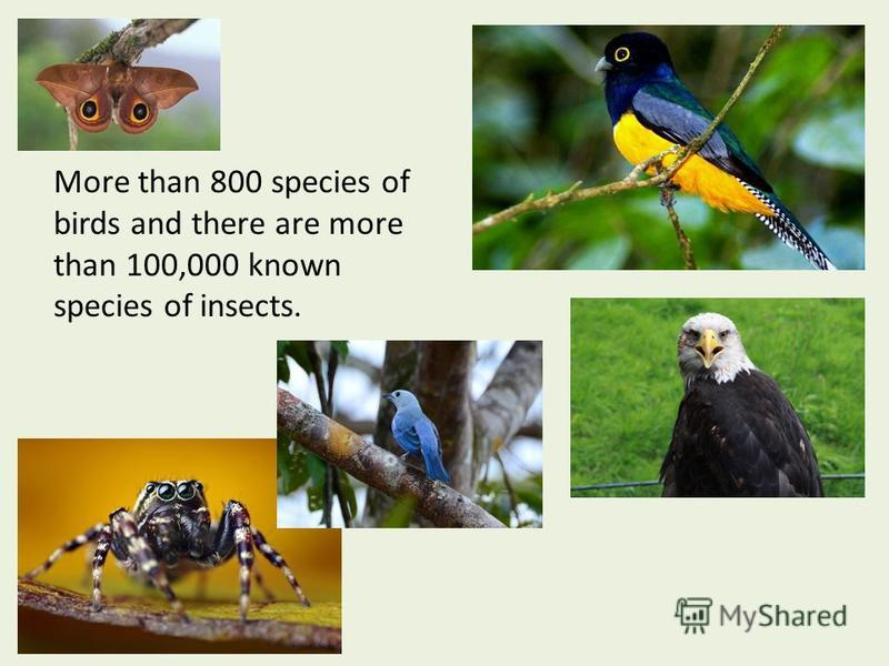 More than 800 species of birds and there are more than 100,000 known species of insects.