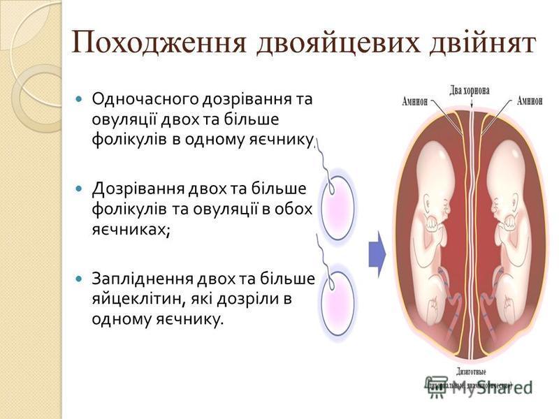 Походження двояйцевих двійнят Одночасного дозрівання та овуляції двох та більше фолікулів в одному яєчнику ; Дозрівання двох та більше фолікулів та овуляції в обох яєчниках ; Запліднення двох та більше яйцеклітин, які дозріли в одному яєчнику.