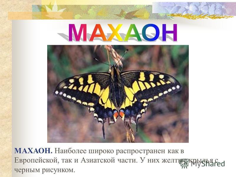 МАХАОН. Наиболее широко распространен как в Европейской, так и Азиатской части. У них желтые крылья с черным рисунком.