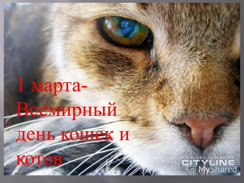 1 марта - Всемирный день кошек и котов.