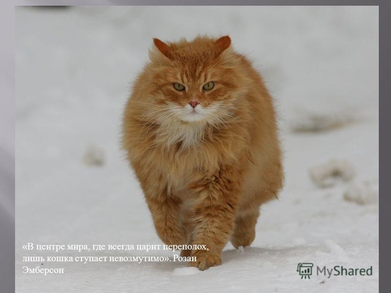 « В центре мира, где всегда царит переполох, лишь кошка ступает невозмутимо ». Розан Эмберсон
