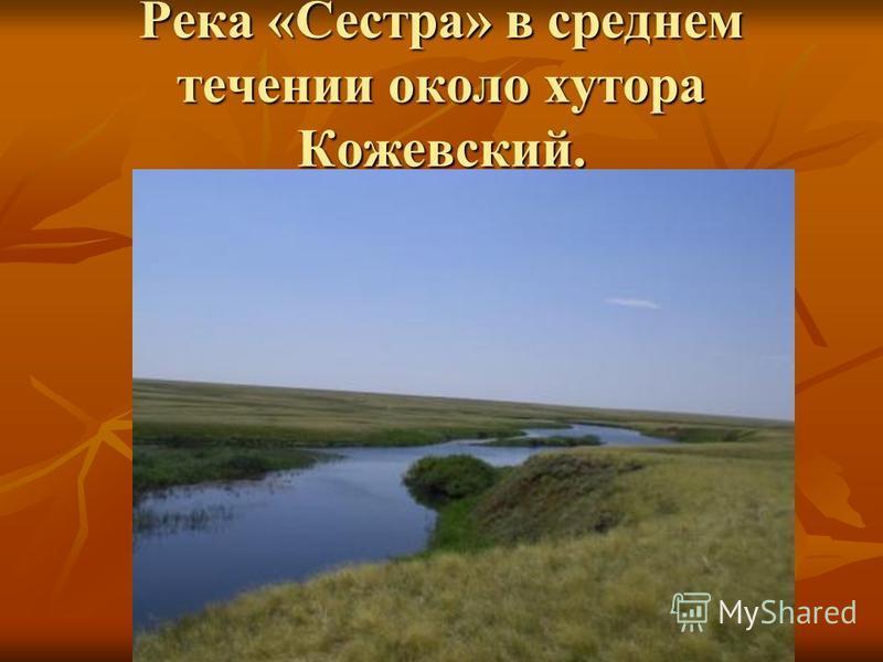 Речка «Таловка» в месте впадения в р. Камелик.