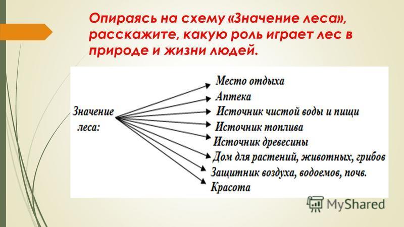 Схема о значении леса