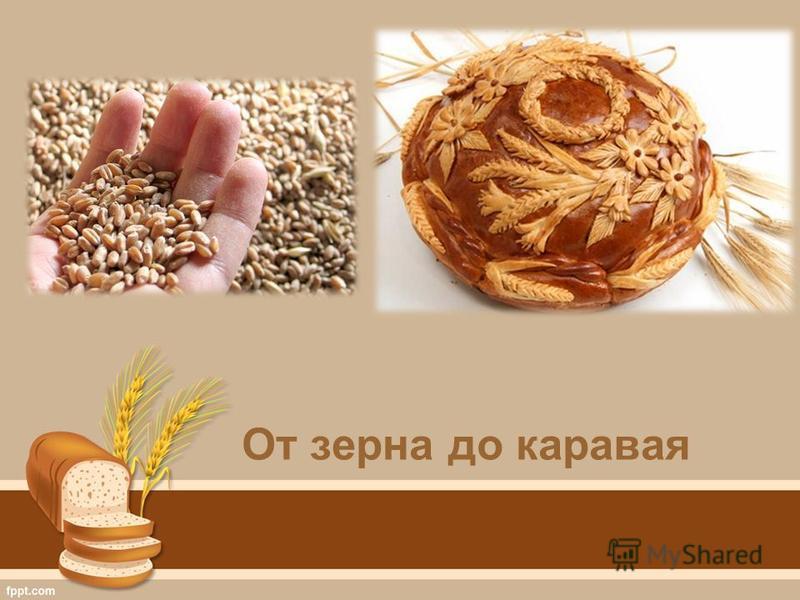 От зерна до каравая