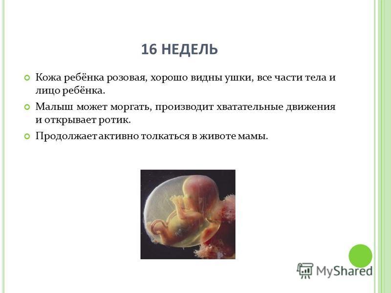 16 НЕДЕЛЬ Кожа ребёнка розовая, хорошо видны ушки, все части тела и лицо ребёнка. Малыш может моргать, производит хватательные движения и открывает ротик. Продолжает активно толкаться в животе мамы.