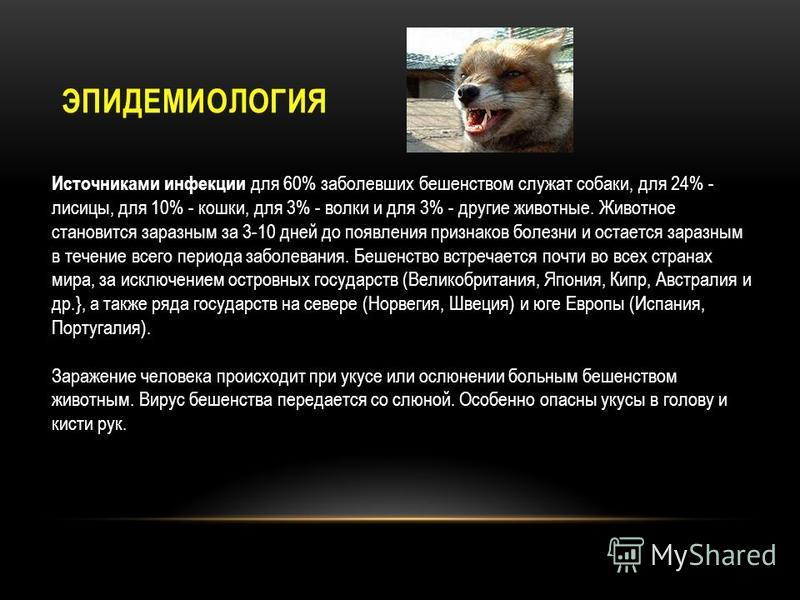 ЭПИДЕМИОЛОГИЯ Источниками инфекции для 60% заболевших бешенством служат собаки, для 24% - лисицы, для 10% - кошки, для 3% - волки и для 3% - другие животные. Животное становится заразным за 3-10 дней до появления признаков болезни и остается заразным