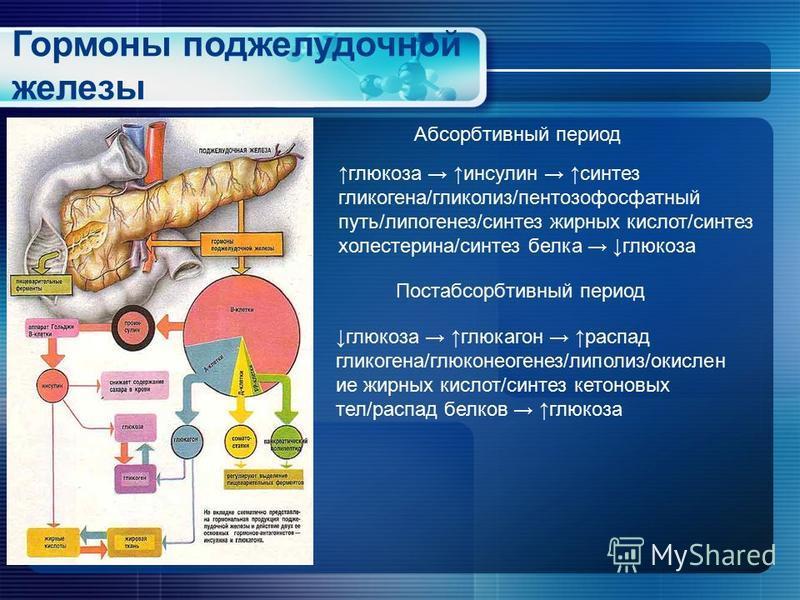 Гормоны поджелудочной железы глюкоза инсулин синтез гликогена/гликолиз/пентозофосфатный путь/липогенез/синтез жирных кислот/синтез холестерина/синтез белка глюкоза глюкоза глюкагон распад гликогена/глюконеогенез/липолиз/окислен ие жирных кислот/синте