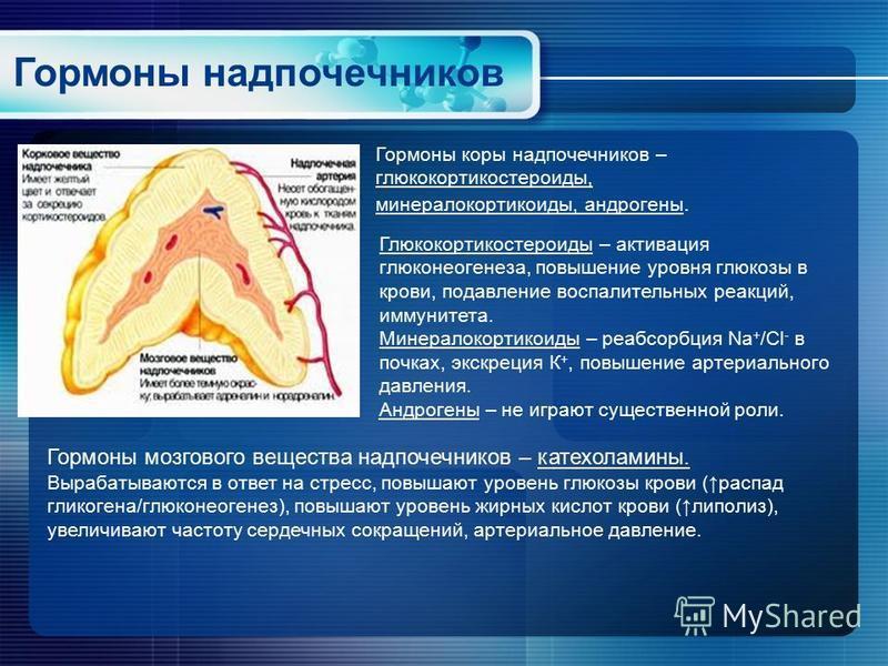 Гормоны надпочечников Гормоны коры надпочечников – глюкокортикостероиды, минералокортикоиды, андрогены. Глюкокортикостероиды – активация глюконеогенеза, повышение уровня глюкозы в крови, подавление воспалительных реакций, иммунитета. Минералокортикои