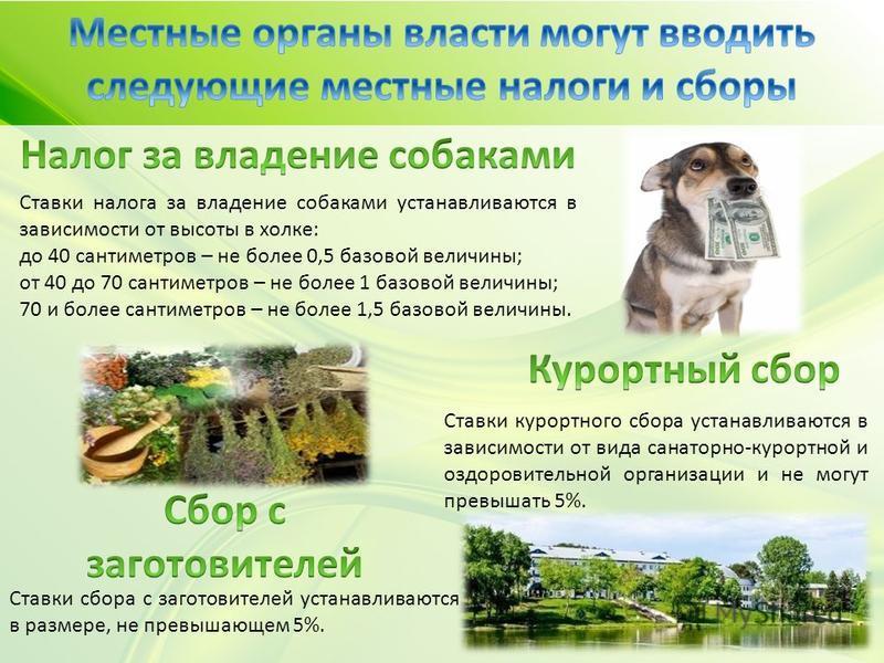 Ставки налога за владение собаками устанавливаются в зависимости от высоты в холке: до 40 сантиметров – не более 0,5 базовой величины; от 40 до 70 сантиметров – не более 1 базовой величины; 70 и более сантиметров – не более 1,5 базовой величины. Став