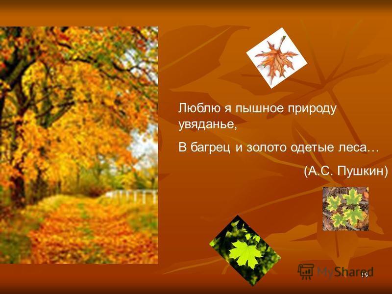 19 Люблю я пышное природу увяданье, В багрец и золото одетые леса… (А.С. Пушкин)