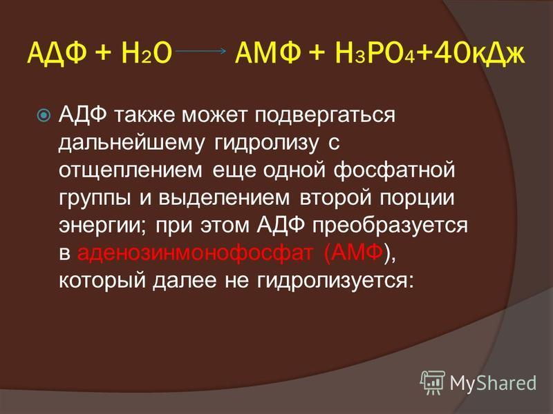 АДФ + Н 2 О АМФ + Н 3 РО 4 +40 к Дж АДФ также может подвергаться дальнейшему гидролизу с отщеплением еще одной фосфатной группы и выделением второй порции энергии; при этом АДФ преобразуется в аденозинмонофосфат (АМФ), который далее не гидролизуется: