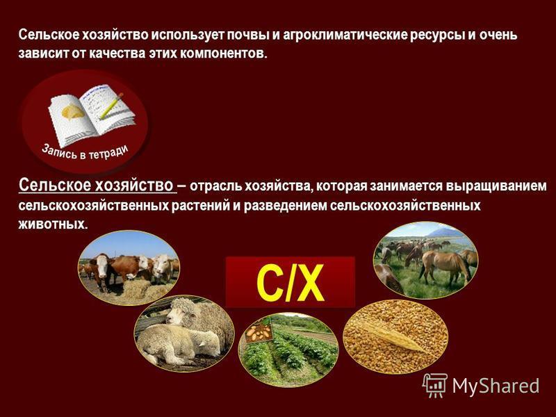 Сельское хозяйство использует почвы и агроклиматические ресурсы и очень зависит от качества этих компонентов. Сельское хозяйство – отрасль хозяйства, которая занимается выращиванием сельскохозяйственных растений и разведением сельскохозяйственных жив