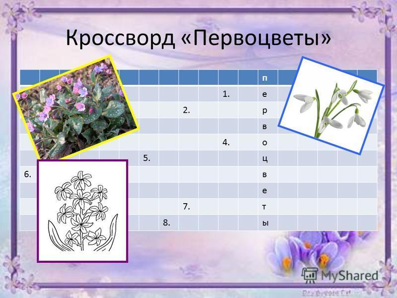 Кроссворд «Первоцветы» п 1. е 2. р 3. в 4. о 5. ц 6. в е 7. т 8.ы