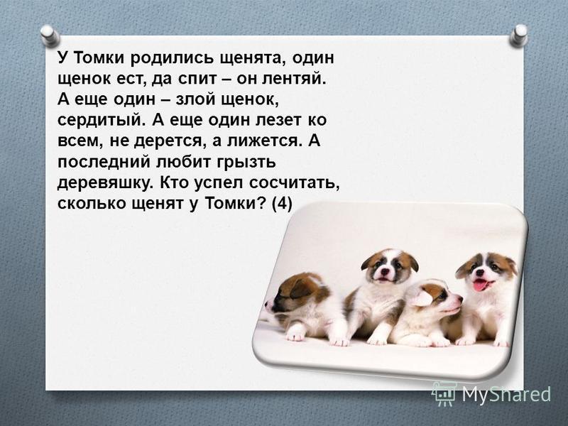 У Томки родились щенята, один щенок ест, да спит – он лентяй. А еще один – злой щенок, сердитый. А еще один лезет ко всем, не дерется, а лижется. А последний любит грызть деревяшку. Кто успел сосчитать, сколько щенят у Томки ? (4)