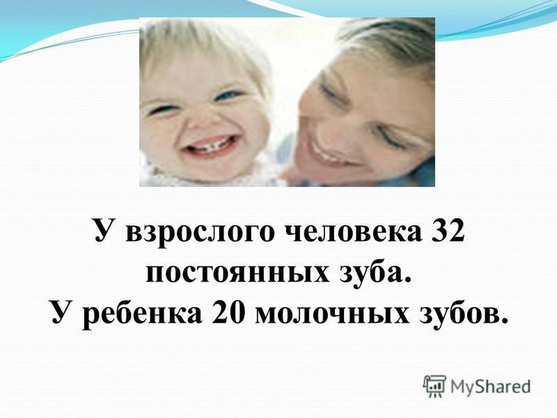 У взрослого человека 32 постоянных зуба. У ребенка 20 молочных зубов.