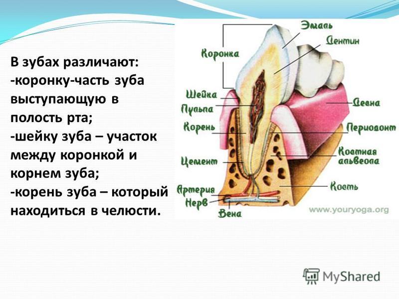 Выступающие корни зубов