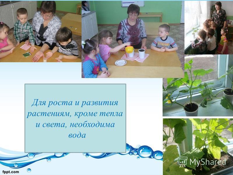 Для роста и развития растениям, кроме тепла и света, необходима вода