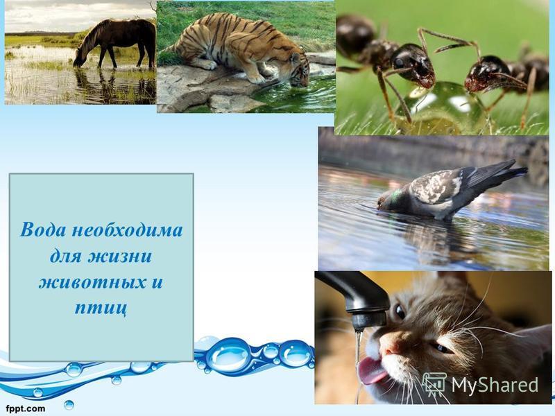 Вода необходима для жизни животных и птиц