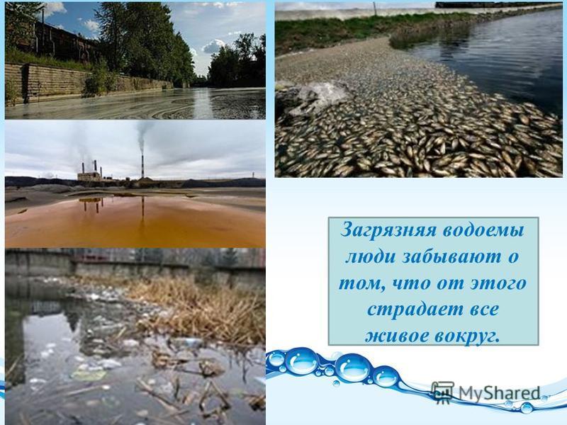 Загрязняя водоемы люди забывают о том, что от этого страдает все живое вокруг.