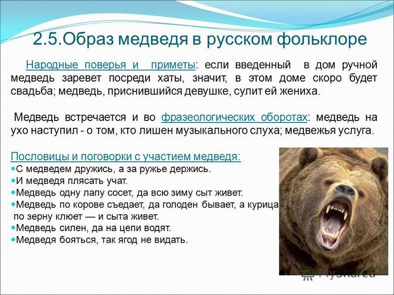 2.5. Образ медведя в русском фольклоре Народные поверья и приметы: если введенный в дом ручной медведь заревет посреди хаты, значит, в этом доме скоро будет свадьба; медведь, приснившийся девушке, сулит ей жениха. Медведь встречается и во фразеологич