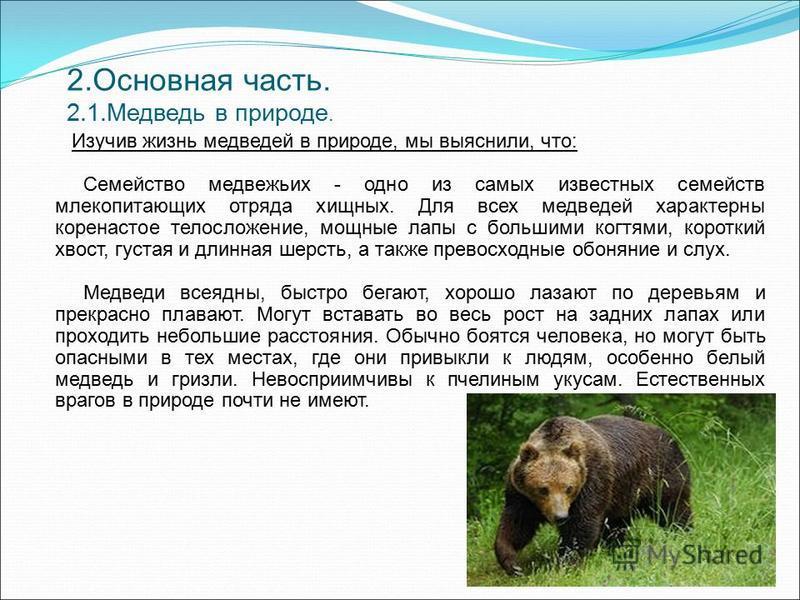 2. Основная часть. 2.1. Медведь в природе. Изучив жизнь медведей в природе, мы выяснили, что: Семейство медвежьих - одно из самых известных семейств млекопитающих отряда хищных. Для всех медведей характерны коренастое телосложение, мощные лапы с боль