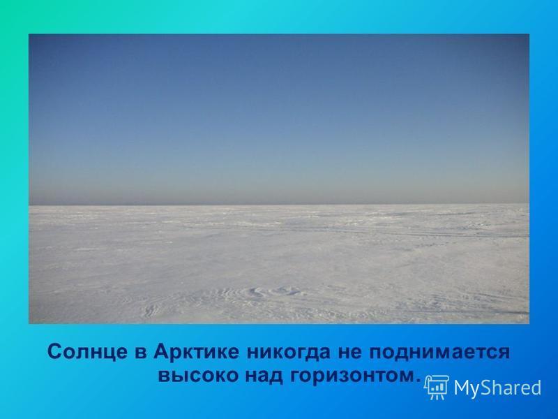 Солнце в Арктике никогда не поднимается высоко над горизонтом.