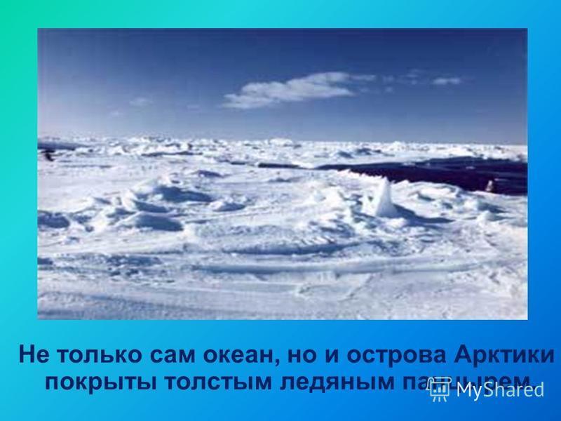 Не только сам океан, но и острова Арктики покрыты толстым ледяным панцирем.