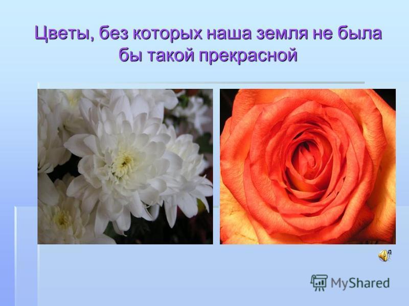 Цветы, без которых наша земля не была бы такой прекрасной