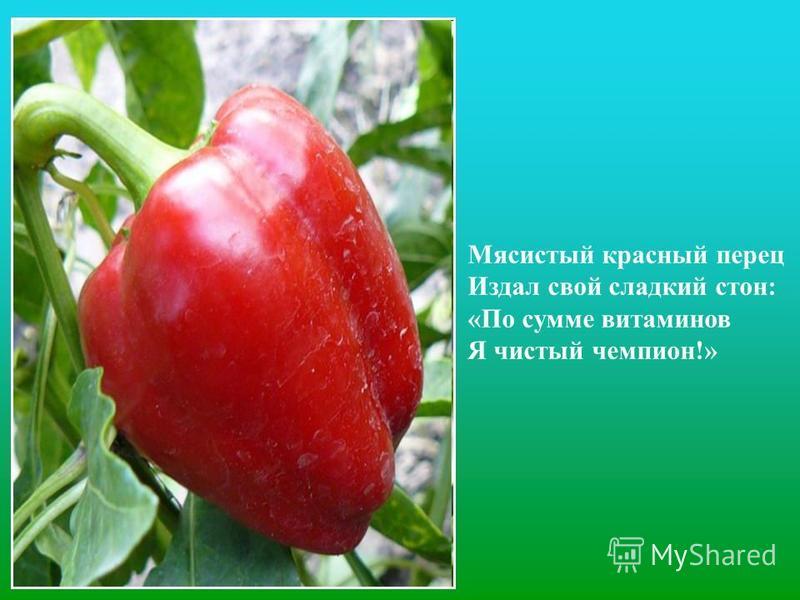 Мясистый красный перец Издал свой сладкий стон: «По сумме витаминов Я чистый чемпион!»