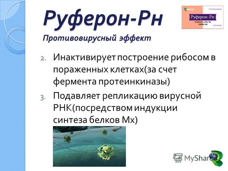 2. Инактивирует построение рибосом в пораженных клетках ( за счет фермента протеинкиназы ) 3. Подавляет репликацию вирусной РНК ( посредством индукции синтеза белков Мх ) Руферон - Рн Противовирусный эффект