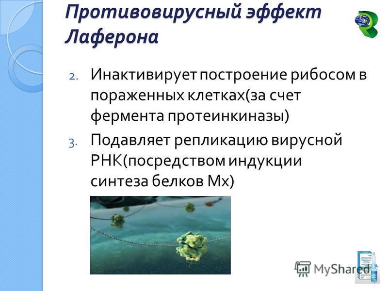 2. Инактивирует построение рибосом в пораженных клетках ( за счет фермента протеинкиназы ) 3. Подавляет репликацию вирусной РНК ( посредством индукции синтеза белков Мх ) Противовирусный эффект Лаферона