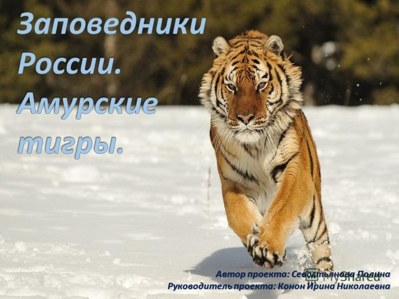 Автор проекта: Севостьянова Полина Руководитель проекта: Конон Ирина Николаевна