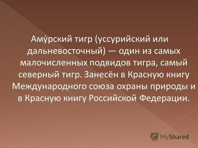 Аму́русский тигр (уссурийский или дальневосточный) один из самых малочисленных подвидов тигра, самый северный тигр. Занесён в Красную книгу Международного союза охраны природы и в Красную книгу Российской Федерации.