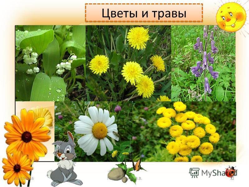Цветы и травы 11.03.201612Полковниченко З.В.