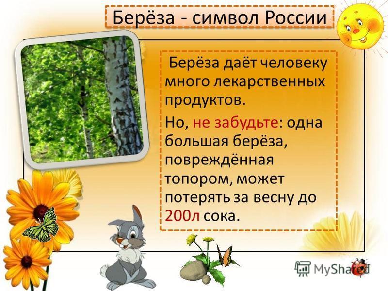 Берёза - символ России Берёза даёт человеку много лекарственных продуктов. Но, не забудьте: одна большая берёза, повреждённая топором, может потерять за весну до 200 л сока.