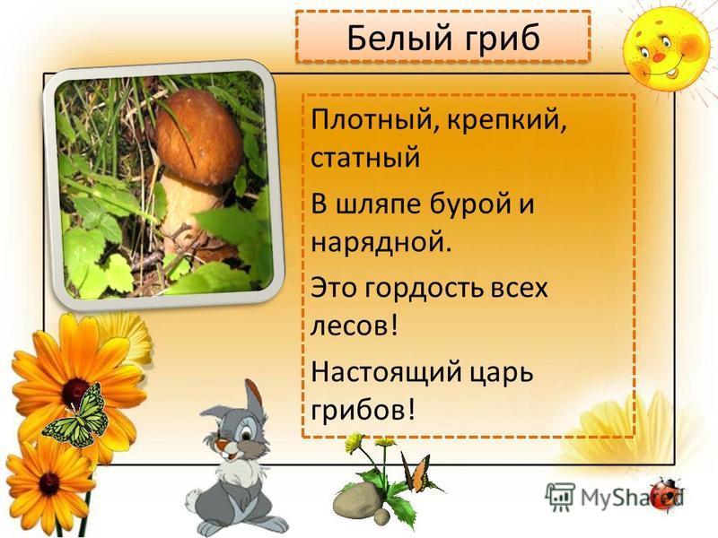 Белый гриб Плотный, крепкий, статный В шляпе бурой и нарядной. Это гордость всех лесов! Настоящий царь грибов!
