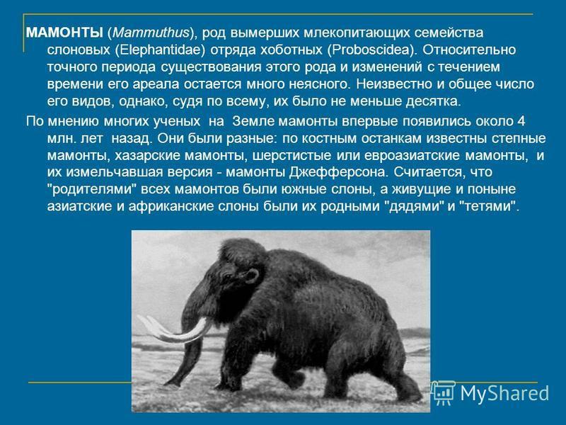 МАМОНТЫ (Mammuthus), род вымерших млекопитающих семейства слоновых (Elephantidae) отряда хоботных (Proboscidea). Относительно точного периода существования этого рода и изменений с течением времени его ареала остается много неясного. Неизвестно и общ