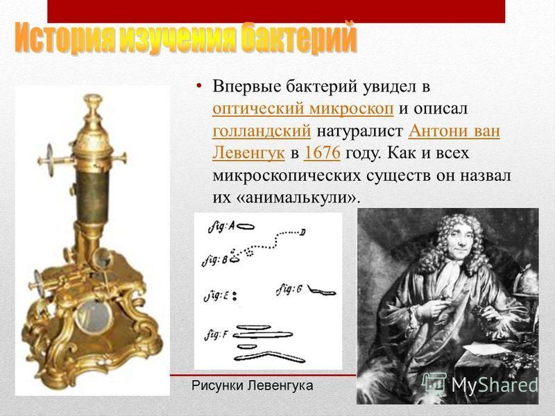 Впервые бактерий увидел в оптический микроскоп и описал голландский натуралист Антони ван Левенгук в 1676 году. Как и всех микроскопических существ он назвал их «анималькули». оптический микроскоп голландский Антони ван Левенгук 1676 Рисунки Левенгук