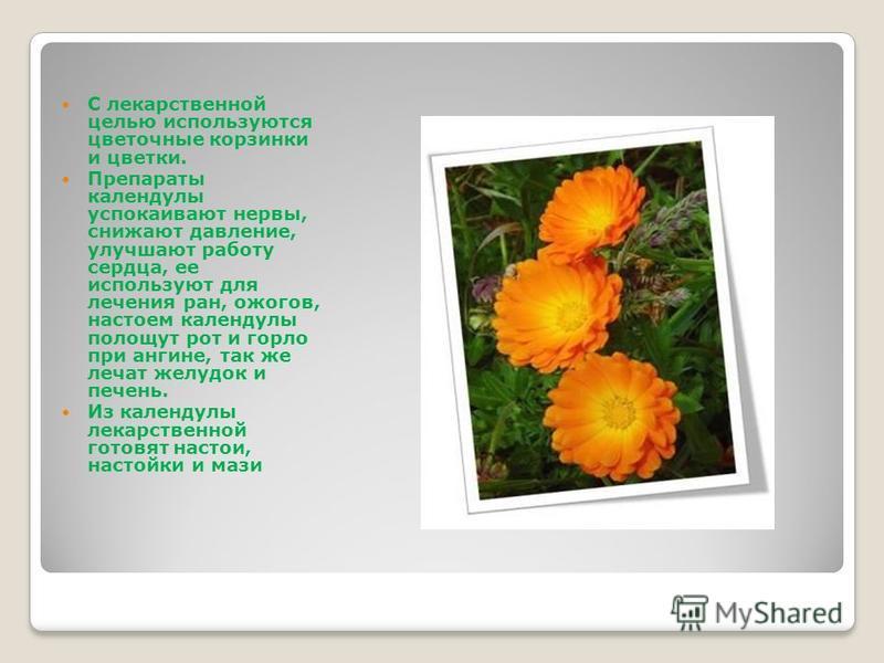 С лекарственной целью используются цветочные корзинки и цветки. Препараты календулы успокаивают нервы, снижают давление, улучшают работу сердца, ее используют для лечения ран, ожогов, настоем календулы полощут рот и горло при ангине, так же лечат жел