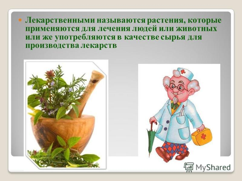 Лекарственными называются растения, которые применяются для лечения людей или животных или же употребляются в качестве сырья для производства лекарств