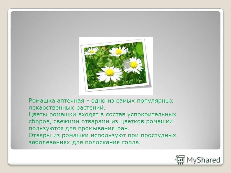 Ромашка аптечная - одно из самых популярных лекарственных растений. Цветы ромашки входят в состав успокоительных сборов, свежими отварами из цветков ромашки пользуются для промывания ран. Отвары из ромашки используют при простудных заболеваниях для п