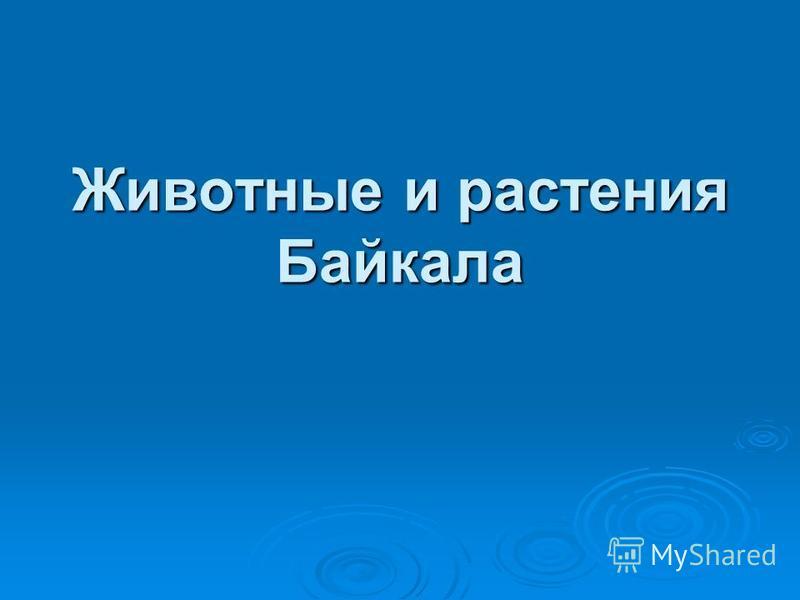 Животные и растения Байкала
